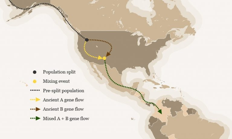 Re-convergence: The Ancient DNA Story of People of America