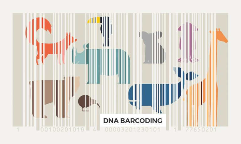 More Reliable DNA Barcodes