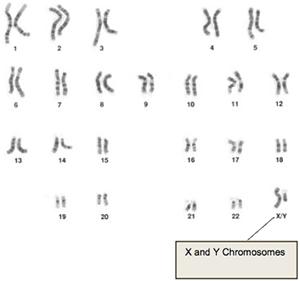 microscope image of human DNA